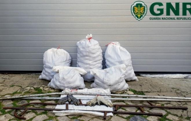 GNR deteve dois homens em Sines por furto de 130 quilos de pinhas