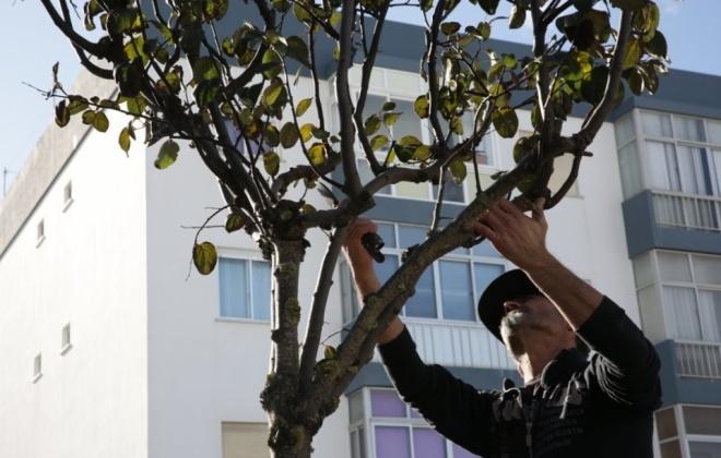A Câmara Municipal de Sines iniciou a poda das árvores da cidade