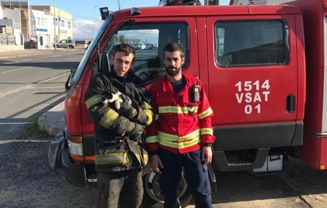 Bombeiros de Sines resgatam gato em Porto Covo