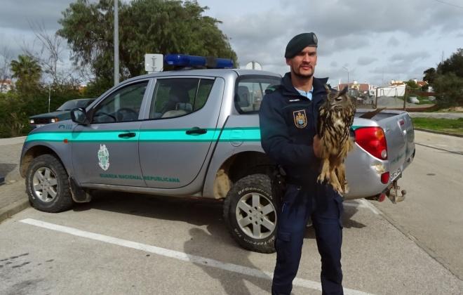 GNR recupera Bufo Real no Torrão em Alcácer do Sal