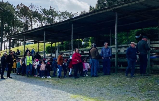 Mercado de gado regressou a São Teotónio