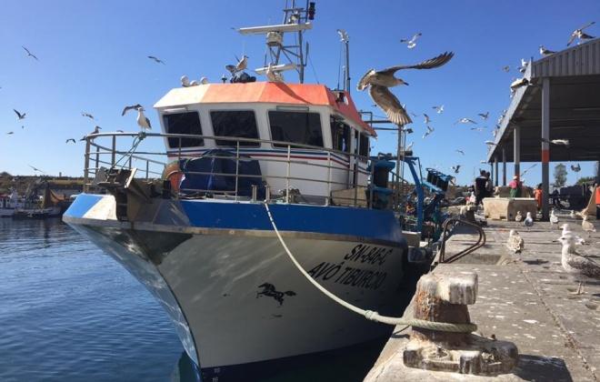 Pesca da sardinha é autorizada a partir de 1 de junho e até 31 de julho