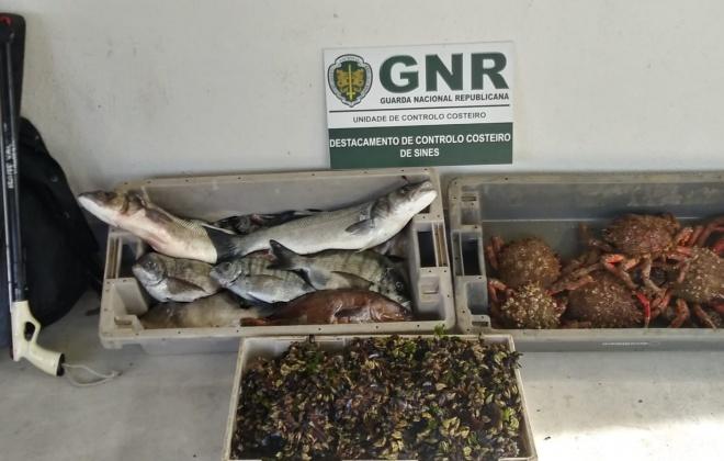UCC apreendeu 40 quilos de marisco e pescado capturados ilegalmente em Aljezur