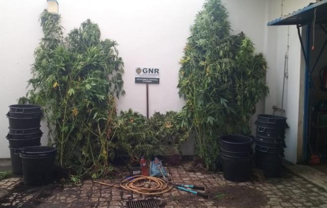 GNR deteve dois homens em Odemira por tráfico de estupefacientes