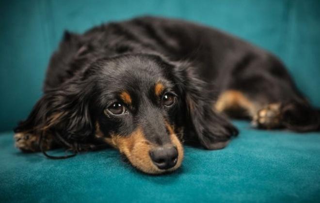 Carta aberta contesta mudança de tutela de animais de companhia