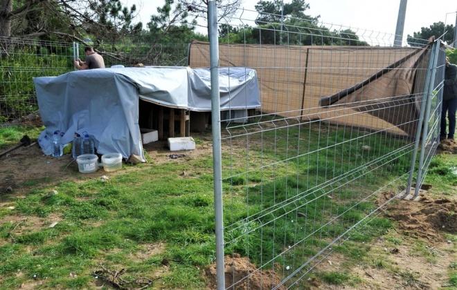 Gabinete Veterinário inicia captura de matilha em Sines